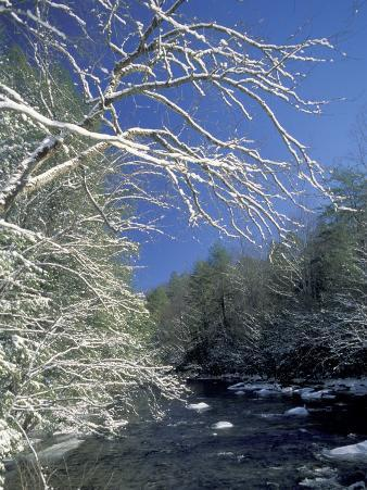 Snow-Covered Branches on Little River, Great Smoky Mountains National Park, Tennessee, USA