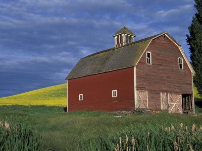 Red Barns and Canola Fields, Eastern Washington, USA
