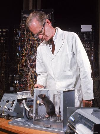 "B. Frederic Skinner at Harvard Training Rat in ""Skinner Box"" to Press Lever and Be Rewarded"
