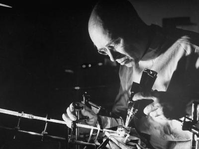 Dr. Melvin H. Knisely Using a Quartz Rod to Conduct Light Into a Frog's Organs to observe blood