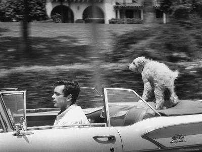 Actor/Artist Gardner McKay Speeding Along in Chevrolet Convertible as His Dog Enjoys the Ride