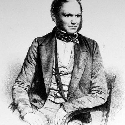 British Naturalist Advanced Theory of Evolution Charles Darwin Portrayed in Lithograph by Maguire