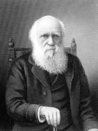 Engraving of British Naturalist Charles Darwin Developed Theory of Evolution by Natural Selection