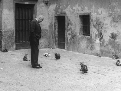 Otto Preminger Looking at Stray Cats on Venice Street
