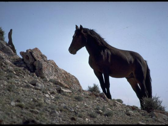 Wild Mustang Horses Running Across Field in Wyoming and ...