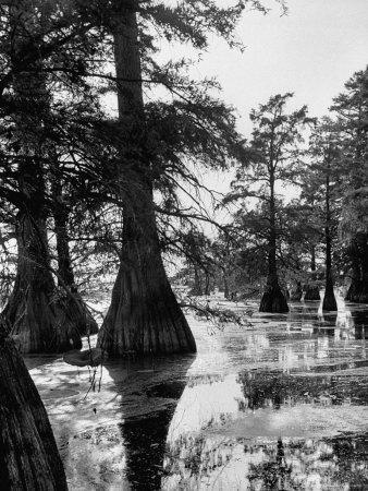 Reelfoot Lake, Tennessee, Showing Stagnant Lake Waters