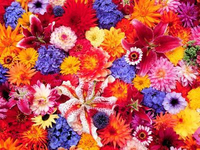 Dahlia, Oriental Lilies, Sunflower, Petunia, Zinnia, Hydrangea Bloom, Sammamish, Washington, USA