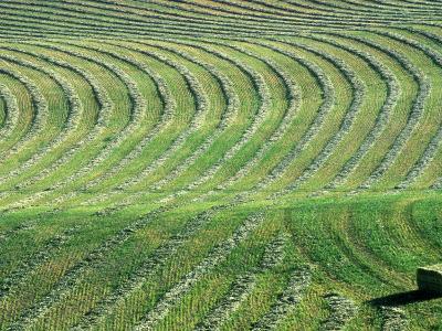 Hay Patterns near Bozeman, Montana, USA