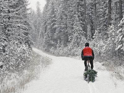 Mountain Biker Bringing Home the Family Christmas Tree, Whitefish, Montana, USA
