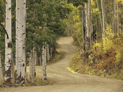 Rural Forest Road Through Aspen Trees, Gunnison National Forest, Colorado, USA