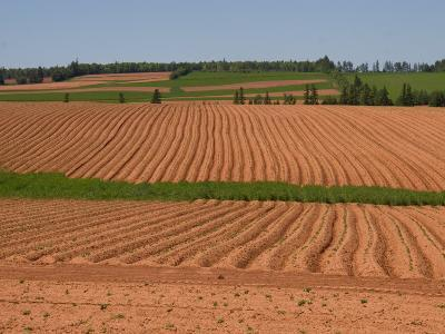 The Furrows in the Red Dirt of the Island Produce Great Potatoes, Prince Edward Island, Canada