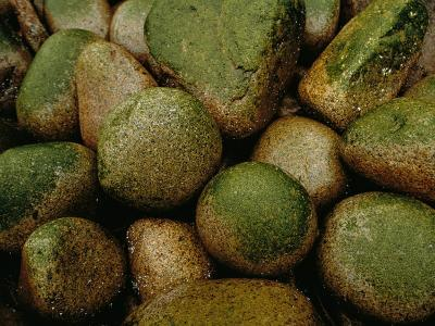 Close View of Moss-Covered Stones in Rain