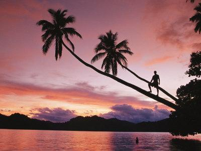 Man, Palm Trees, and Bather Silhouetted at Sunrise