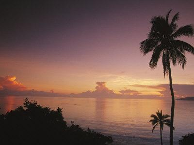 Palm Trees Silhouetted against Sky and Ocean at Sunrise