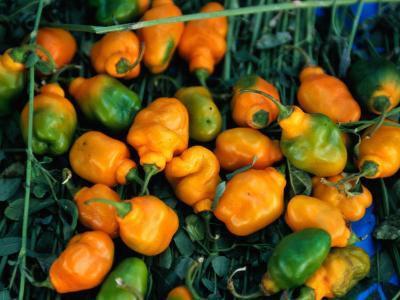 Habanero Chillies at Tepoztlan Market, Tepoztlan, Morelos, Mexico