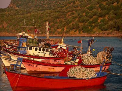 Fish Boats on Wharf, Assos, Turkey