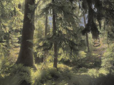 A Scenic View Through a Northern Washington Rain Forest