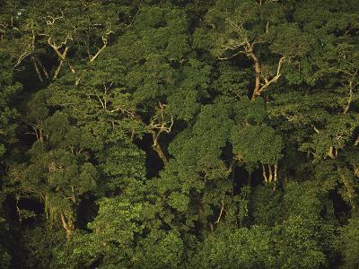 An Aerial View of the Rain Forest in Nouabale-Ndoki National Park