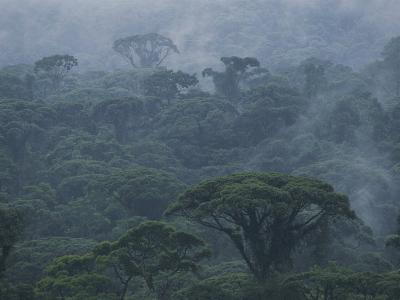 Mist Rises from a Rain Forest, Costa Rica