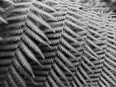 Fern Fronds Create Patterns