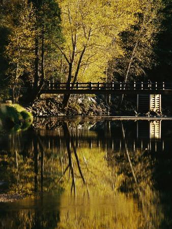 Trees and a Footbridge are Reflected in the Merced River