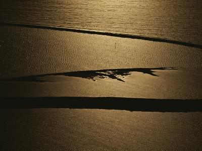 The Setting Sun Reflects off a Beach in Olympic National Park