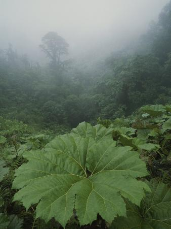 Fog and Rain Forest Foliage, Costa Rica