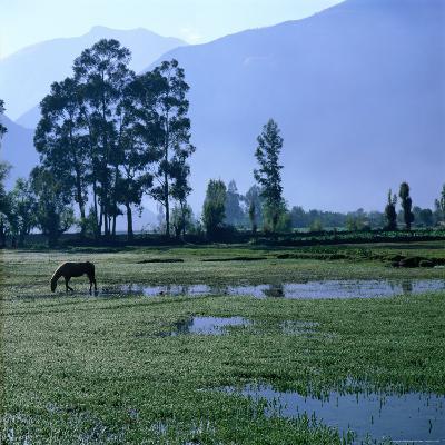 A Lone Horse Grazing in Rural Yucay, Yucay, Cuzco, Peru