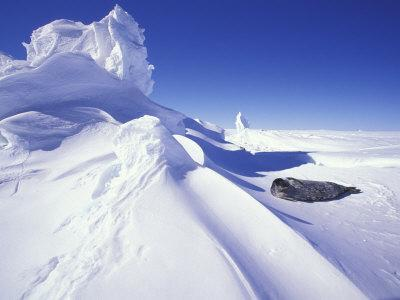 Weddell Fur Seal and Ice Formations, Antarctica