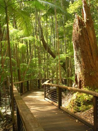 Boardwalk by Wanggoolba Creek, Fraser Island, Queensland, Australia
