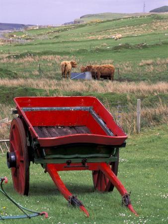 Farm Animals and Wheelbarrow, Kilmuir, Isle of Skye, Scotland