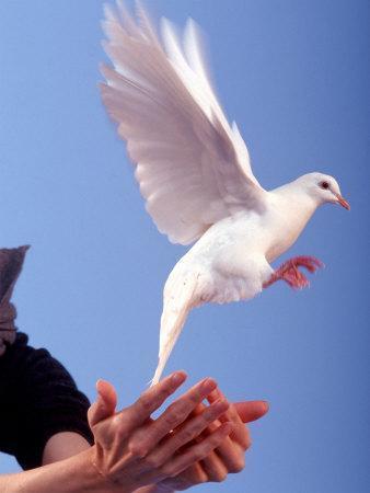 Man Releasing a Dove