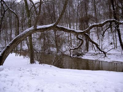 A Curved Tree Frames Rock Creek During a Winter Snow Storm