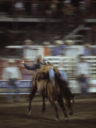 A Cowboy Rides a Bucking Bronco During a Rodeo, Steamboat Springs, Colorado