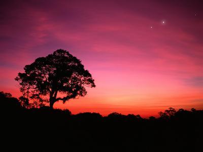 Tree and Stars at Dusk, Atlantic Rainforest, Sao Paulo State, Brazil