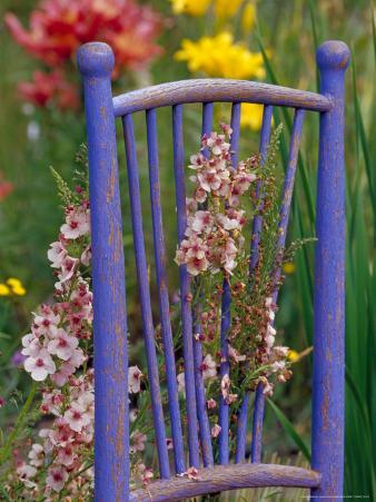Mixed Flowers and Old Chair, Seattle, Washington, USA