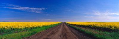 Road through Canola Field, Washington, USA
