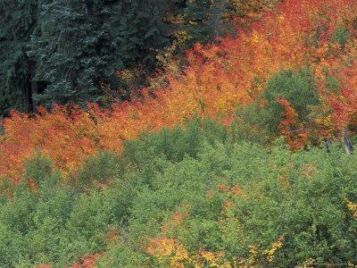 Autumn Color in the Mt. Rainier National Park, Washington, USA
