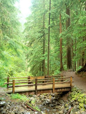 Trail Bridge, Upper Sol Duc Valley, Olympic National Park, Washington, USA