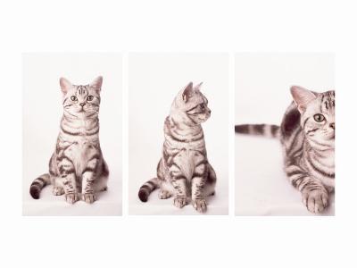 Kitty's Approach Triptych