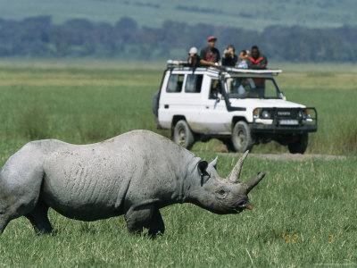 Tourists View a Rhinoceros from a Safari Jeep