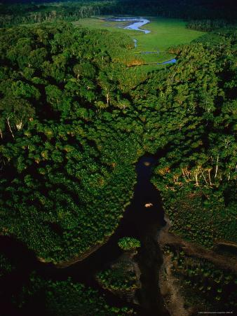 Aerial View of a Rain Forest Interrupted by Small Clearings
