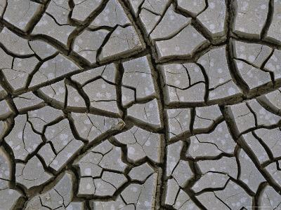 Mud Cracks Form When Streams or Lakes Dry up During Droughts
