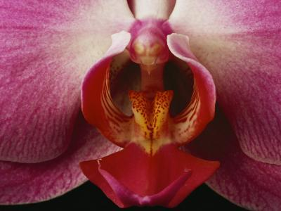 Close View of a Delicate Orchid Blossom