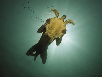 Underwater View of Swimmer and Turtle Silhouetted against the Sun