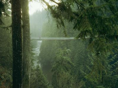 A Bridge Spans a Salmon Spawning River in a Temperate Rainforest