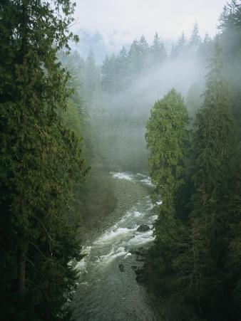 A Salmon Spawning River Runs Through a Temperate Rainforest