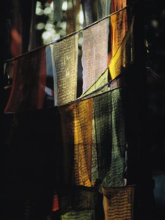 Buddhist Prayer Flags Hang in the Trees in Darjeeling