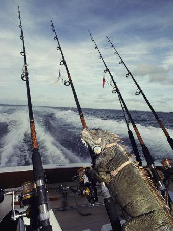 A Pet Iguana Appears to Be Fishing from the Back of a Moving Boat