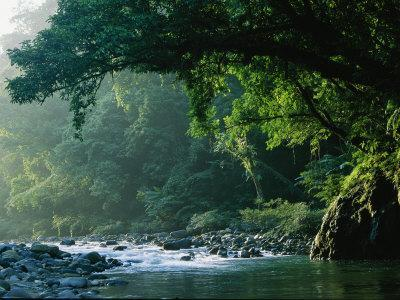 A River Flows Through a Northern Sierra Madre Natural Park Rainforest
